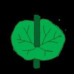 leaf shape perfiolate